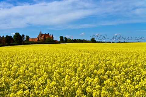 http://www.dreamstime.com/royalty-free-stock-photo-castle-surrounded-canola-fields-image19624505